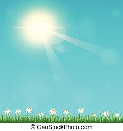 estate, cielo, fondo, fiore, prato, soleggiato, tempo