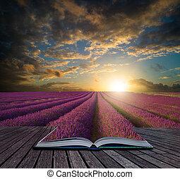 estate, concetto, sopra, giacimento lavanda, tramortire, libro, tramonto, paesaggio