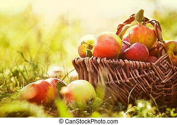 estate, erba, organico, mele