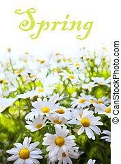 estate, fiore, arte, primavera, astratto, fondo, erba