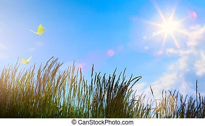 estate, fiore, estate, astratto, -, campo, fondo