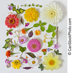 estate, fiori bianchi, fondo