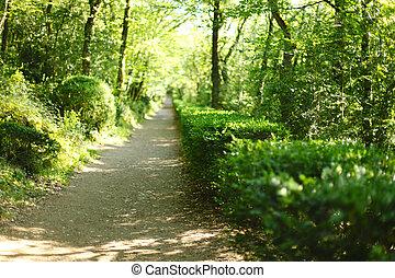 estate, foresta, luce sole