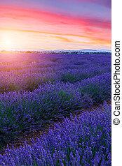 estate, giacimento lavanda, tramonto, valensole, paesaggio