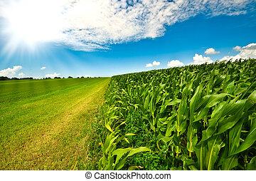 estate, granaglie, terreno coltivato