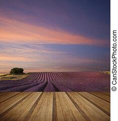 estate, legno, giacimento lavanda, tramortire, tramonto, piano, paesaggio