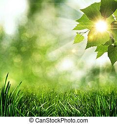 estate, naturale, astratto, sfondi, mattina, presto, foresta