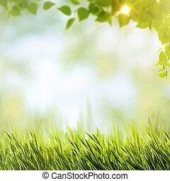 estate, naturale, fogliame, astratto, sfondi, luminoso, sunl