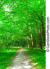 estate, nature., foresta