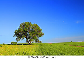 estate, paesaggio albero