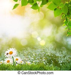 estate, prato, bellezza naturale, astratto, giorno, paesaggio