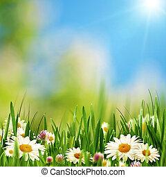 estate, prato, bellezza naturale, astratto, sfondi, margherita, fiori