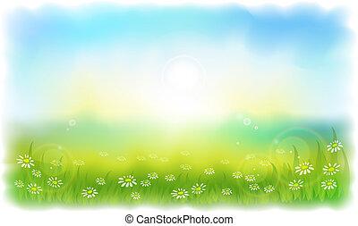 estate, prato, daisies., sun-drenched, soleggiato, outdoors., giorno