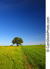 estate, singolo, paesaggio albero