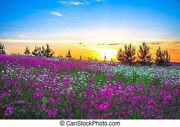 estate, sopra, fioritura, prato, alba