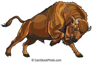 europeo, bisonte