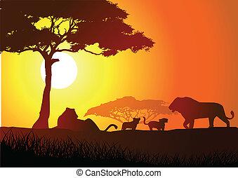 famiglia, leone, silhouette