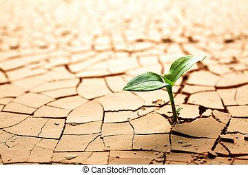 fango, pianta, fesso, secco