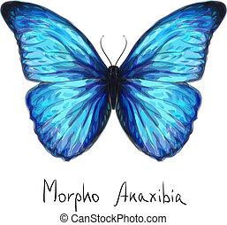 farfalla, anaxibia., acquarello, imitation., morpho