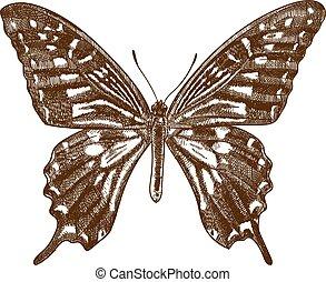 farfalla, anticaglia, swallowtail, incisione, illustrazione