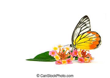farfalla, bello, fiore