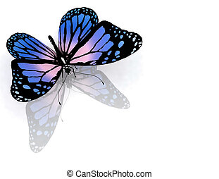 farfalla, bianco