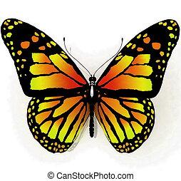 farfalla, blu, colore isolato