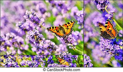 farfalla, collage, fiori, lavanda, azzurramento