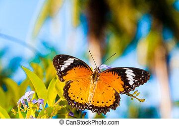 farfalla, estate, colorito, tempo, arancia, vista
