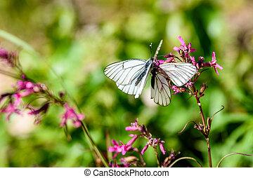farfalla, fiori, soleggiato, prato