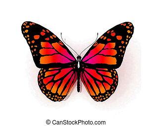 farfalla, isolato, bianco
