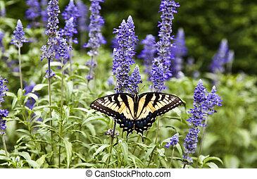 farfalla, natura, estate, verde