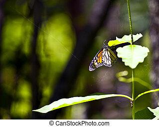 farfalla, natura
