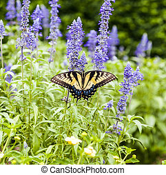 farfalla, natura, verde