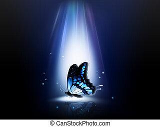 farfalla, notte