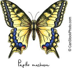 farfalla, papillo, acquarello, machaon., imitation.