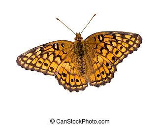farfalla, percorso, ritaglio