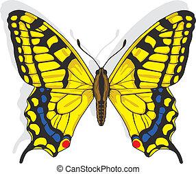 farfalla, swallowtail