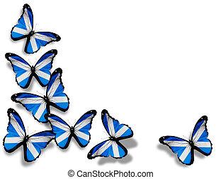 farfalle, isolato, bandiera, fondo, scozzese, bianco
