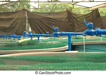 fattoria, agricoltura, aquaculture