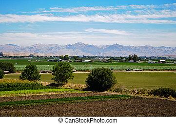 fattoria, agricoltura, california