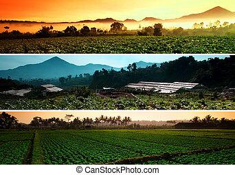 fattoria, collage, beatiful, paesaggio
