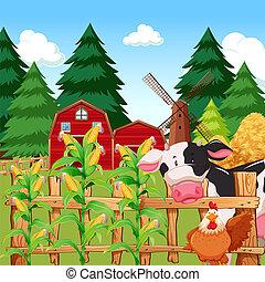fattoria, granaglie, animali