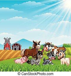 fattoria, luce giorno, animali, felice