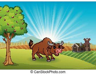 fattoria, mattina, attività, toro