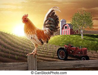 fattoria, paese, mattina