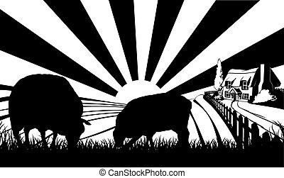 fattoria pecora, concetto, campo
