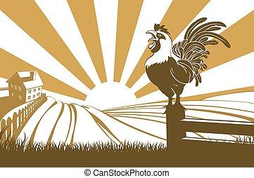 fattoria, pollo, crowing, alba