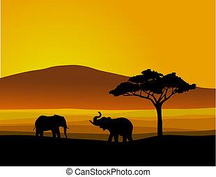 fauna, africa