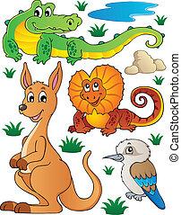 fauna, australiano, 2, set, fauna